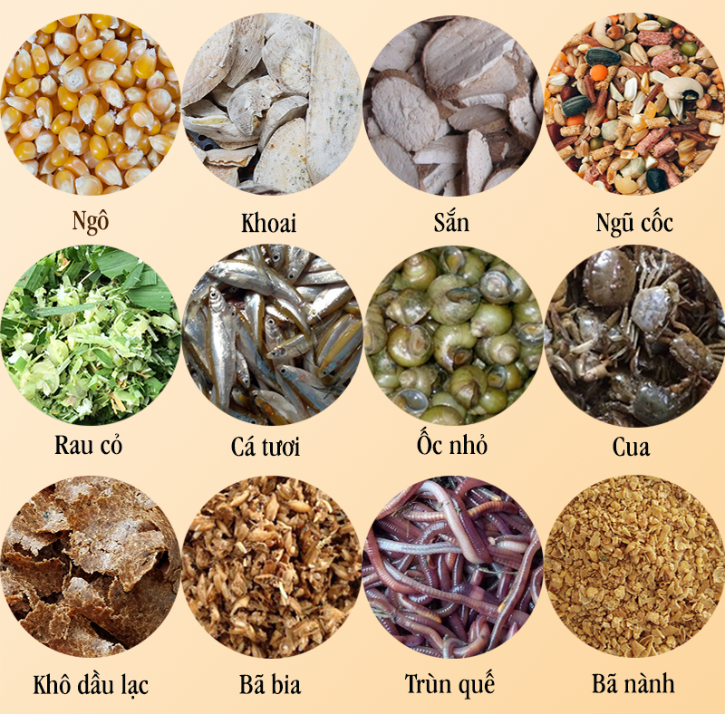 Các loại thức ăn chăn nuôi